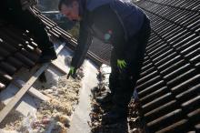 Grössere Schäden durch Isolierung durch einem Marder am Dach
