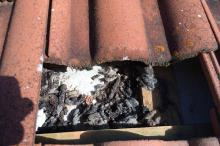 Marderkot im Dach