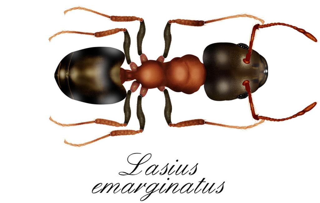 Prächtig Weg Ameisen bekämpfen - Ameisenbekämpfung durch Schädlingsbekämpfer #YT_84